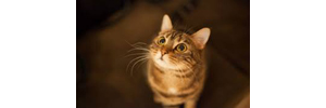 High Pitched Noises Can Induce Seizures in Cats