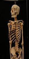 "Nearly 2 Million Year Old ""Modern"" Human Bone Found"