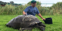 World's oldest living animal, 184 year old tortoise has first bath